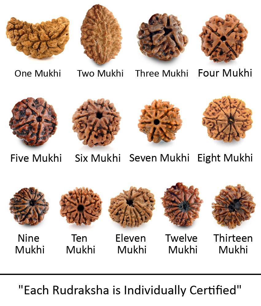 Tipuri de Rudraksha